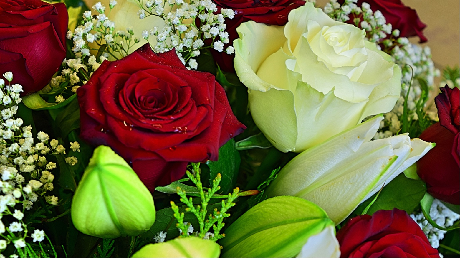 Florist Jakobson 9 - Haapsalu lillepood UUS LILL